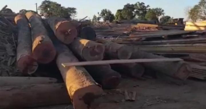 Operação do Ibama em MT apreende 240 toras de madeira de origem ilegal