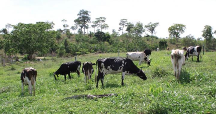 Produtores recuperam no Nortão e Noroeste mil hectares de pastagem degradada com verba do BID