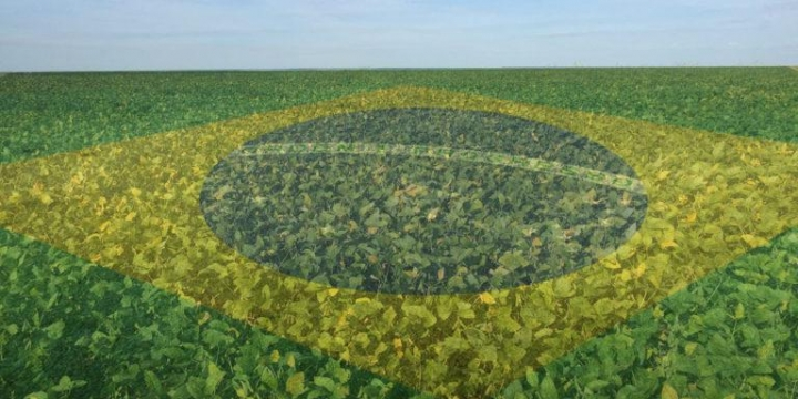 Conheça os 50 municípios mais ricos da agricultura brasileira