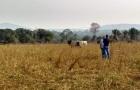 Conab anuncia aprimoramento de pesquisa e prepara estimativas sobre pecuária