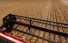 USDA prevê maior colheita de soja e milho nos Estados Unidos na safra 2021/22